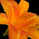 Orange  Sorbet © by Dawn Becker