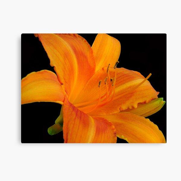 Orange  Sorbet © Canvas Print