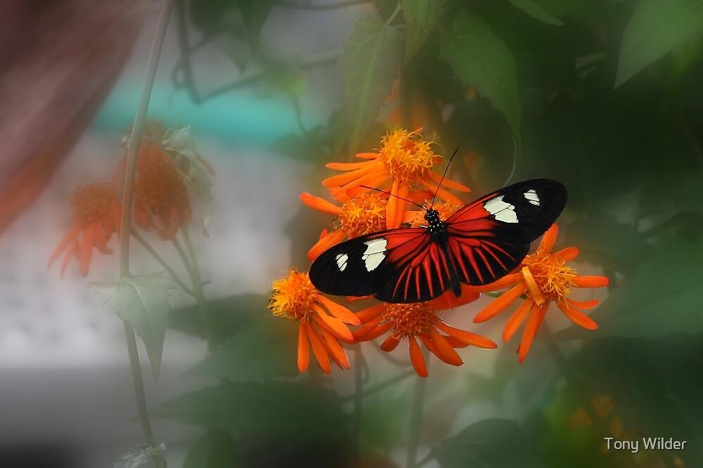 Butterfly Dreams - Krohn Conservatory Cincinnati by Tony Wilder