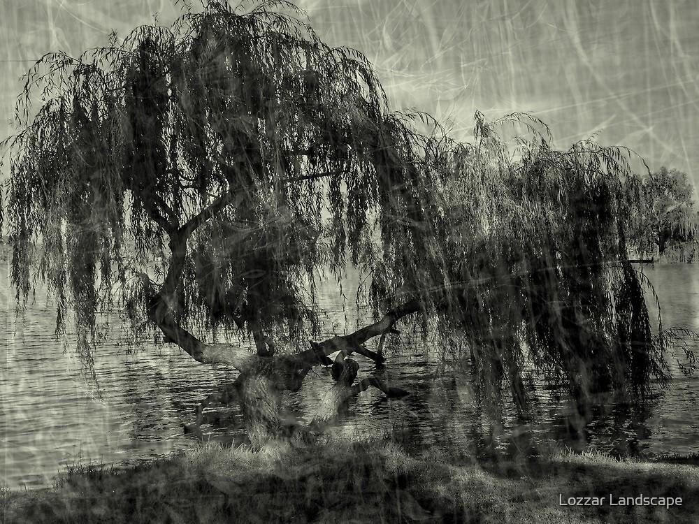 Willow Rest by Lozzar Landscape