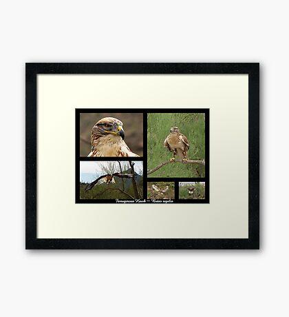 Ferruginous Hawk ~ Raptor Series Framed Print
