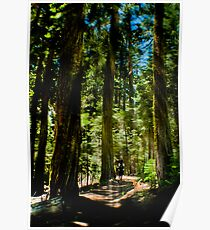 Hiking to Wawona Poster