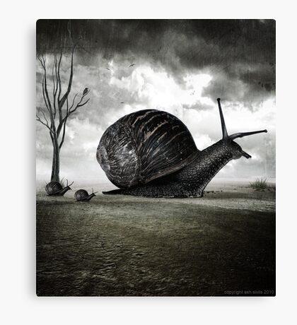 Snail Trail Canvas Print