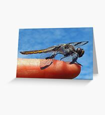 Where are the Mosquitoes? Greeting Card