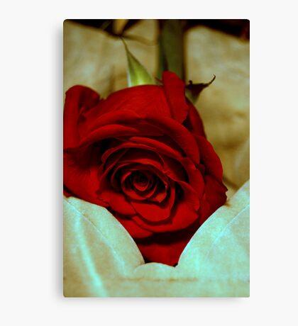 red rose in violin case © 2010 patricia vannucci  Canvas Print