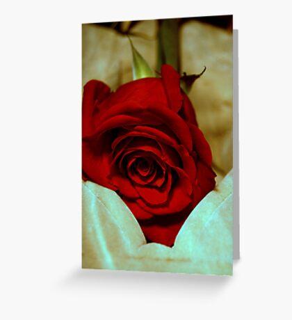 red rose in violin case © 2010 patricia vannucci  Greeting Card