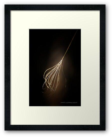 Whisk It © Vicki Ferrari Photography by Vicki Ferrari
