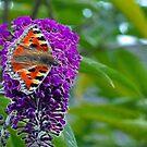 Fractal Flutterby by Lisa Kent
