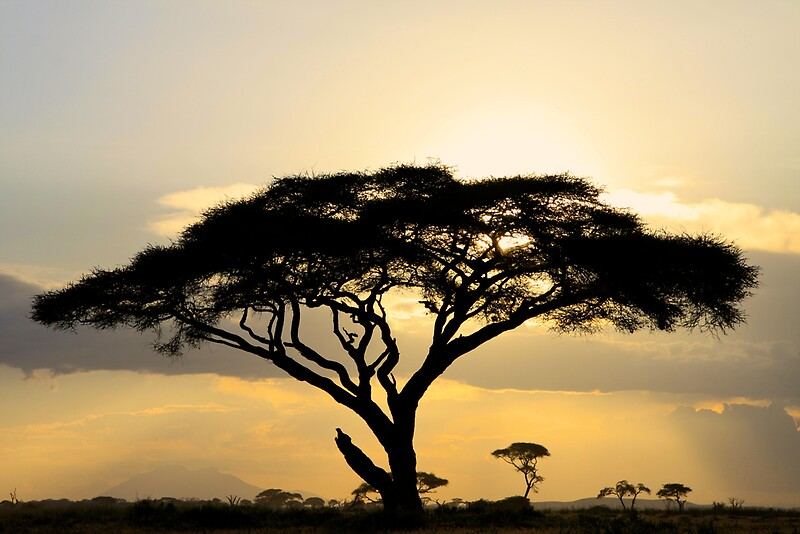 Quot African Savanna At Sunset Quot Posters By Graeme Shannon