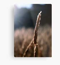 Dancing With The Light Metal Print