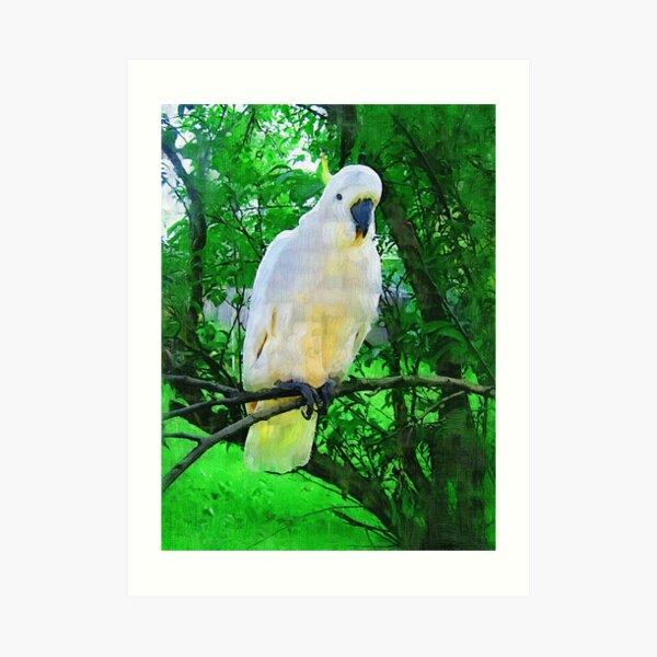 Hello- Aussie Bird Art Print