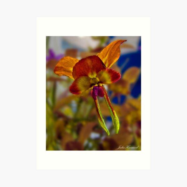 Yalgorup Donkey orchid, Diuris porphyrochila Art Print