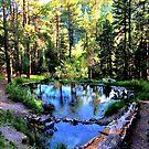 McCauley Warm Springs, Jemez Mts NM by F.  Kevin  Wynkoop