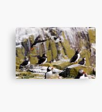 Puffin Party Canvas Print