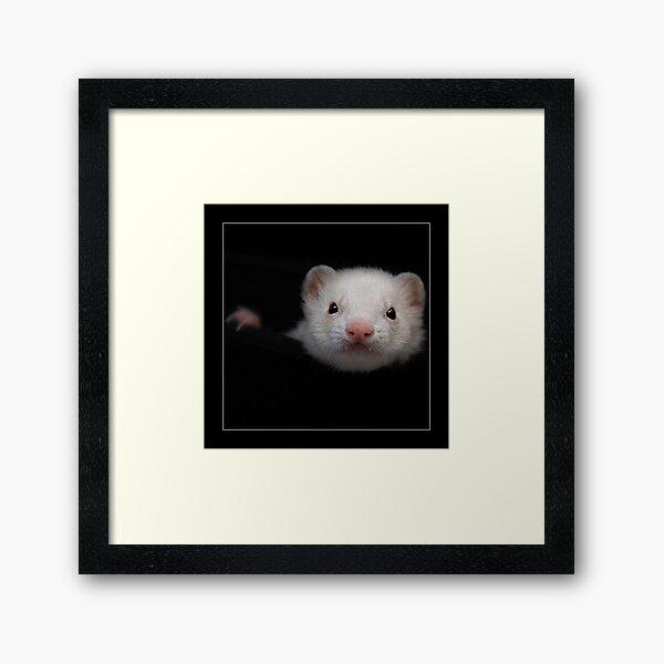 -005- Framed Art Print