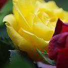 Flower Power by Daidalos