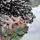 Starfish Alley by Darren Bailey LRPS