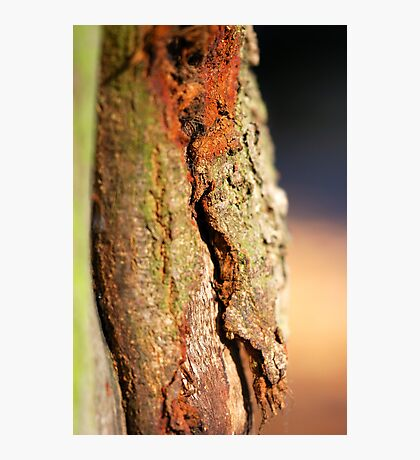 Coloured Layers - Tree Beauty Photographic Print