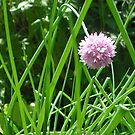 Chive Blossom by brushmarq