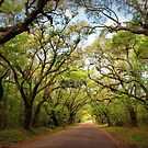 Botany Bay Plantation by Cecilia Carr