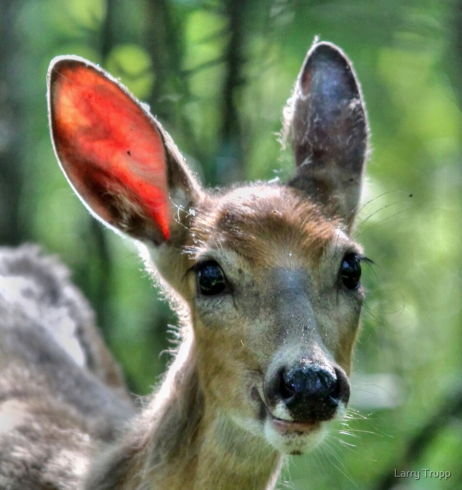 Oh My...What Big, Ears you Have!!! by Larry Trupp