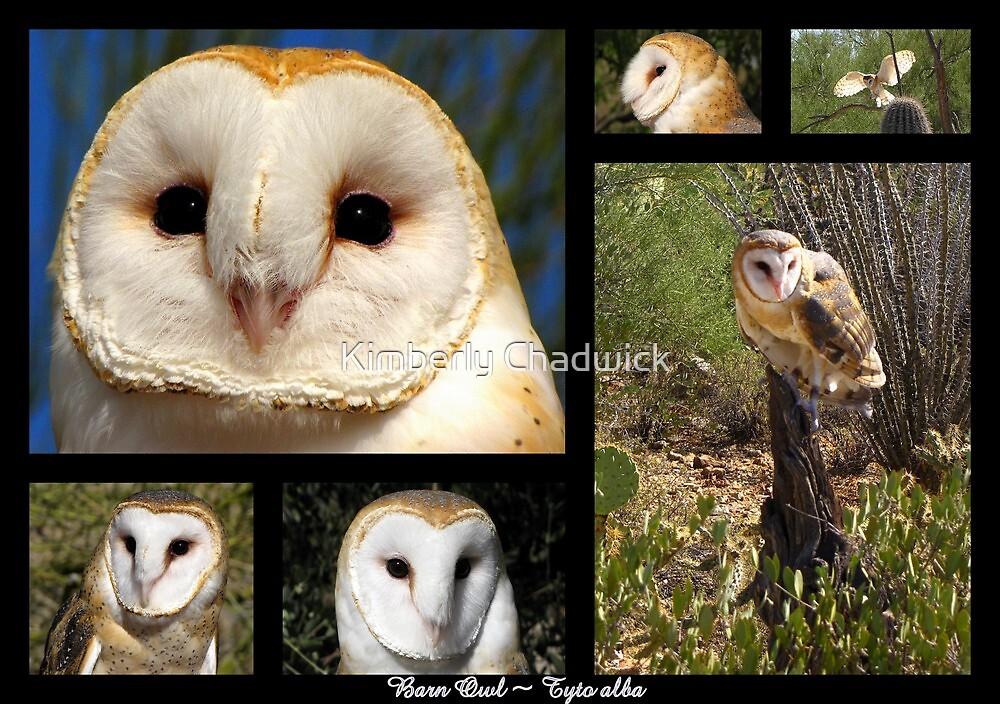 Barn Owl ~ Raptor Series by Kimberly Chadwick
