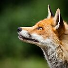 What Do Foxes Dream Of? by Peter Denness