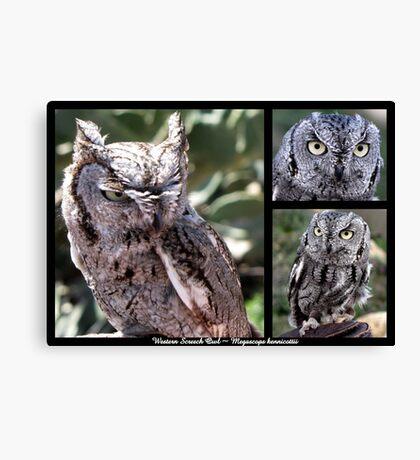 Western Screech Owl ~ Raptor Series Canvas Print