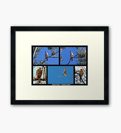 Coopers Hawk ~ Raptor Series Framed Print