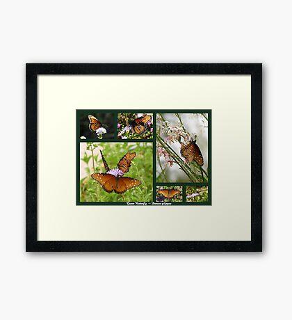 Queen Butterflies Framed Print
