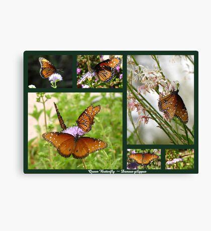 Queen Butterflies Canvas Print