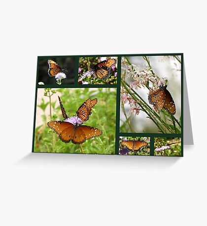 Queen Butterflies Greeting Card