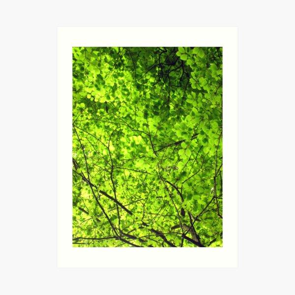 Sea of Green Art Print