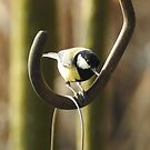 Birds? I'm Hooked!  by CreativeEm