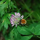 Bumble Busy - by Heather Ross by Bo-Ross