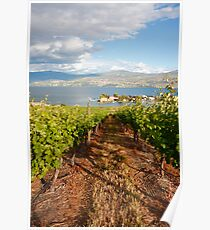 A view from the vineyard Poster