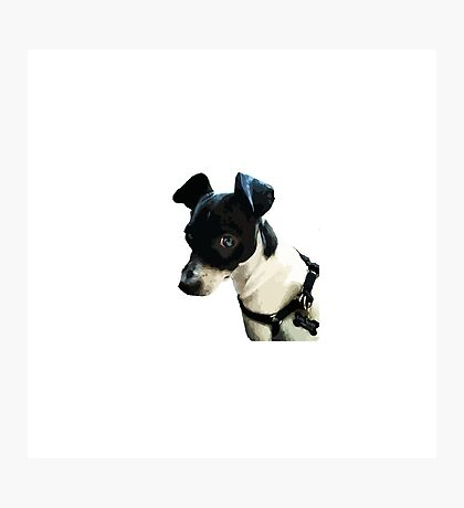 Carl the Rat Terrier Photographic Print