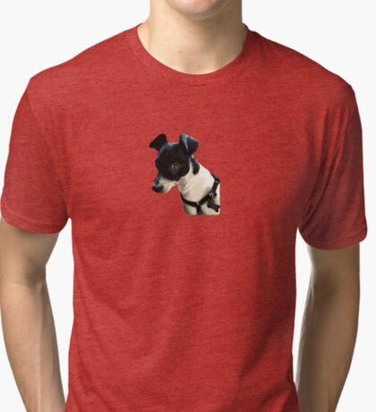 Carl the Rat Terrier Tri-blend T-Shirt