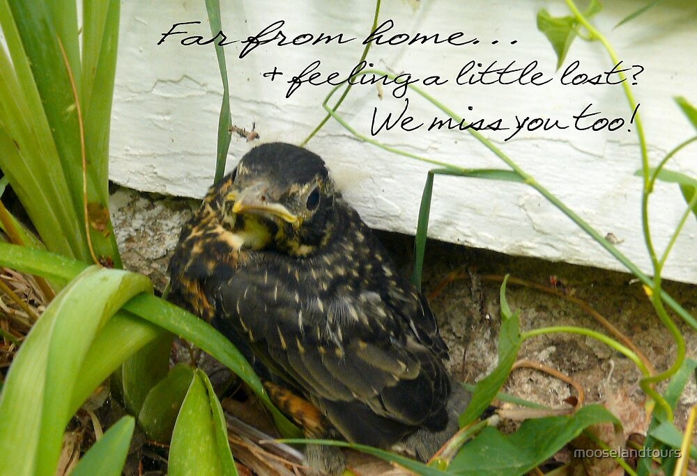 Baby Robin by mooselandtours