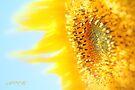 Sunflower 1 by aMOONy