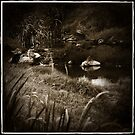 Tenterfield Antique by Lorraine Seipel