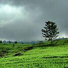 High Tea — Lembang Tea Plantation by AainaA