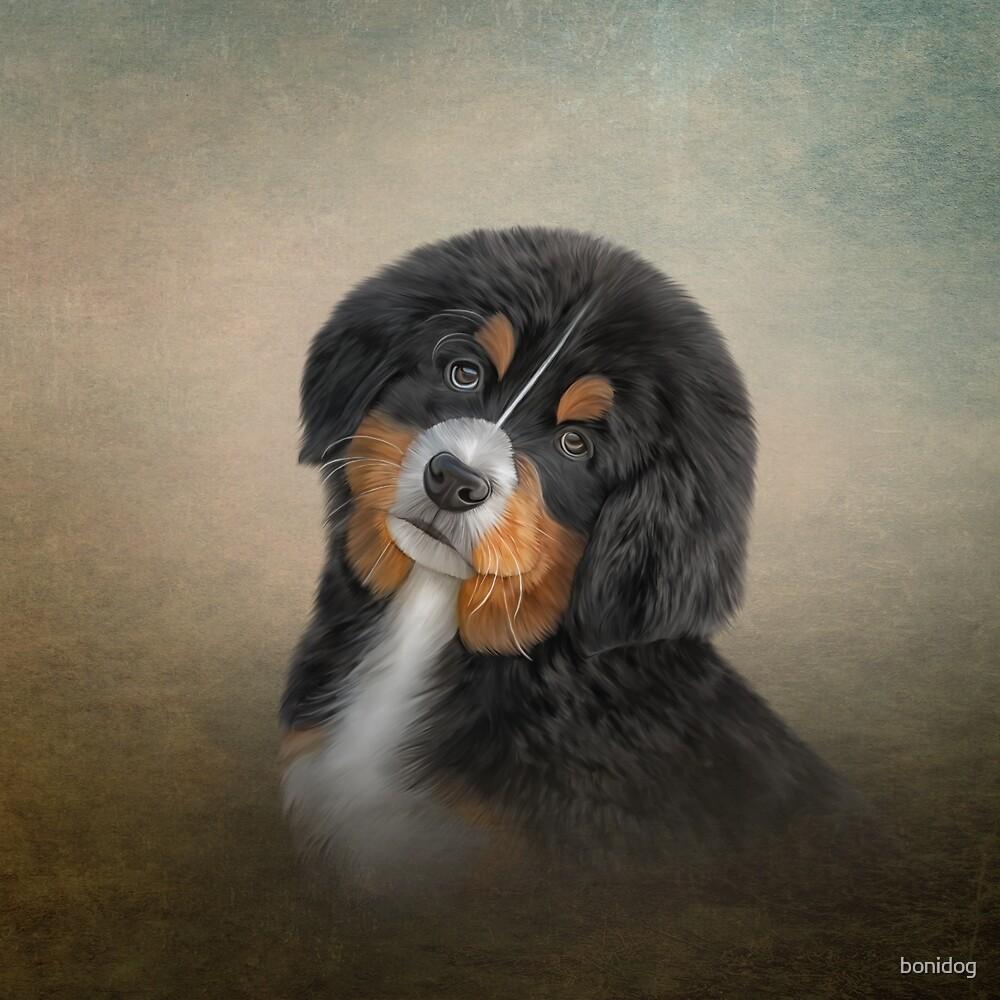 652ec84695e1 Drawing puppy Bernese Mountain Dog