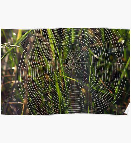 Green cobwebs Poster