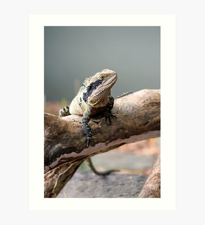 Eastern Water Dragon Art Print