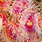 Jewel Anemonies by MattTworkowski