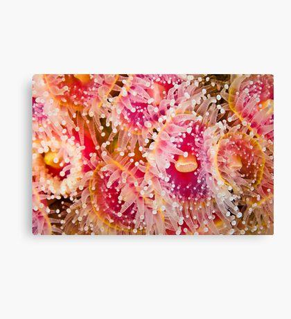 Jewel Anemonies Canvas Print