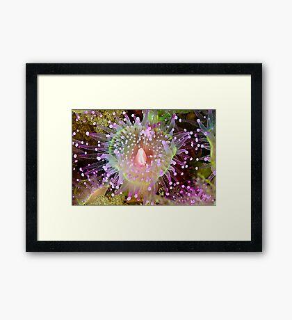 Cathedral Jewel Framed Print