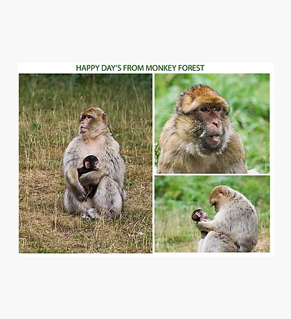 Wish you where here Monkey Forest Photographic Print