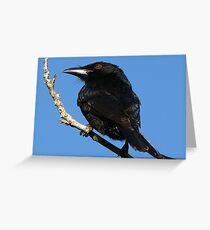 Spangled Drongo Greeting Card